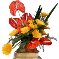 Best Flowers in Bangalore. Send Anthurium Gerbera Arrangement 15 Flowers