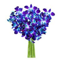 Send Flowers to Bangalore : Blue Orchids