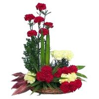 Send New Born Flowers in Bangalore