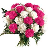 Valentine's Day Flower Delivery Bangalore : Pink White Carnations