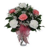 Same day flower delivery in Bangalore  : Carnation Flowers to Bangalore