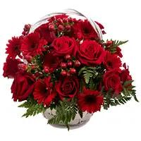 Online Flower Delivery in Bengaluru : Red Gerbera Bouquet