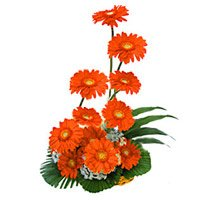 Send Flowers to Bangalore on Birthday
