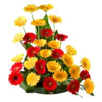 Father's Day Flowers to Bangalore : Red Yellow Gerbera