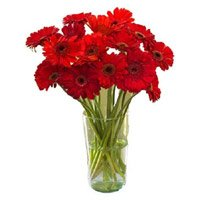 Flowers to Bangalore: Red Gerbera in Vase