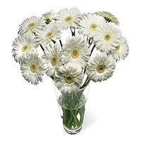 Online Flower Delivery in Bangalore - White Gerbera