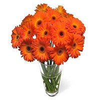 Cheapest Flower delivery in Bengaluru  : Orange Gerbera