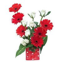 Send Flowers to Bengaluru : Red Gerbera White Roses