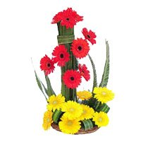 Send Fresh Flowers to Bangalore