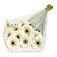 Send Flowers to Bangalore - White Gerbera