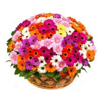 Flower Delivery in Bengaluru - Mix Gerbera Basket