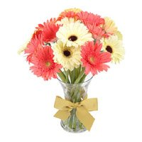 Send Flowers to Bangalore Same Day Delivery : Mix Gerbera