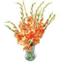 Send Flowers to Bangalore : Flowers to Bangalore