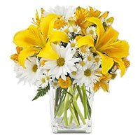 Fresh New Year Flowers Delivery in Bangalore including 3 Yellow Lily 9 White Gerbera in Vase Bangalore