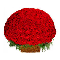 Send Flowers to Bangalore : 500 Rose Baket