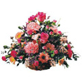 Send Flowers to Bangalore, Flowers to Bangalore