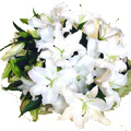 Flowers to Bangalore : Send Lily Flowers to Bangalore